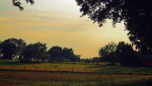 Country Life by OliverBPhotography