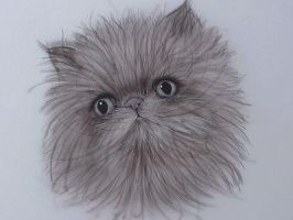 Persian Cat by kimbearlys