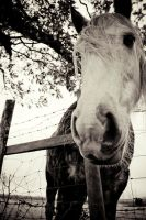 Horse by jpy8