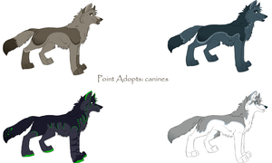 Canine adopts: OPEN by BeachBumDunkin