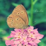 i want to be a butterfly by LuizaLazar
