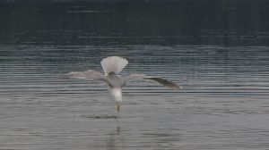 Seagull Stock 0164628 by flindestock