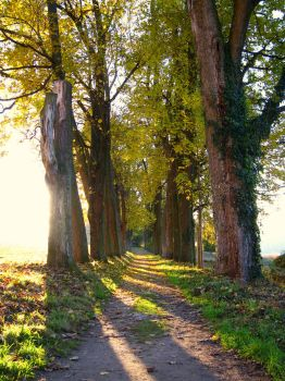 Treeway by mongoose86