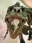 Business End of T-Rex by mmad-sscientist
