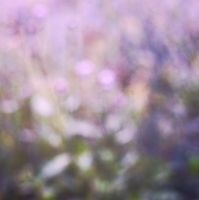 Purple Flowery Bokeh - STOCK PHOTO by JessicaDobbs