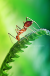 melancholy ant by karman87