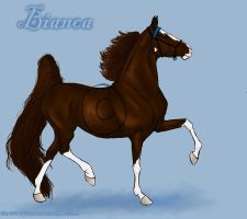 Bianca - Saddlebred Mare by wideturn