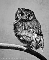 Owl BW by KeeperOfLight