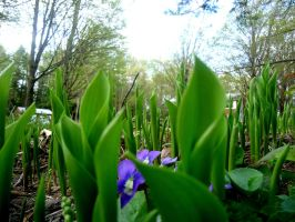 tulip greens and violets by NematophagousMites