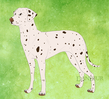 Dalmatian by mexicanine