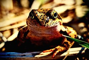 Frog, pose on by lusi-maria