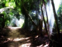 path through jungle by softwave
