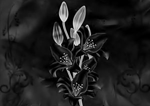White lily in black by poisen2014