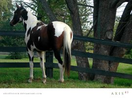 horse8_copabella by axis85stock