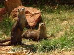 Otters by Kendris