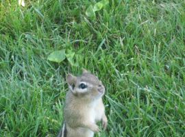 Do Not Feed the Chipmunks by gamingaddictmike125