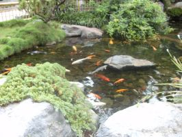 Koi Pond by Hearts-at-Sea