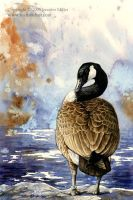 Canada Goose Watercolor Study by Nambroth