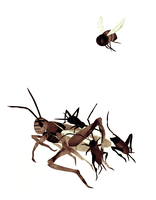 grasshopper, crickets, bee by paperzopilote