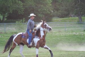 bay overo cantering 5 by jettstock