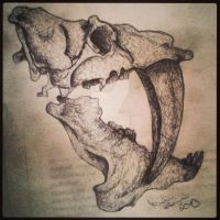 Saber tooth tiger skull. by mirinta