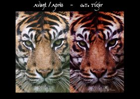 Before After G.T. Tiger by CecileVCreation