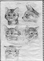 Cats by Anary