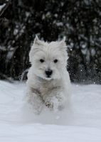 Running in the snow.. by Dodephine