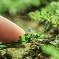So Tiny by HelenaMim