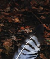 Feather by MoonKey19