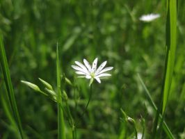 Tiny flower star by mouseland