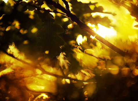 Sunlight in the tree by FrantisekSpurny