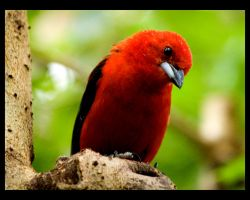 little red bird by Constant-Wegman