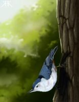 White breasted nuthatch (updated) by Paivatar