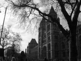 Natural History Museum, London by OIEA4