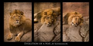 Evolution of a Nap by kayaksailor