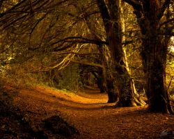 Pathway by andy1349