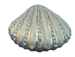 Sparkling Seashell by Variety-Stock