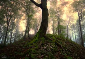 -Son of the forest- by Janek-Sedlar