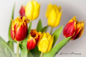 Tulips In Bloom by Partists
