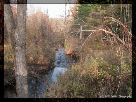 A Creek by Timm45