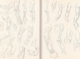 Arm anatomy studies by Marc-F-Huizinga