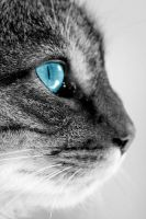 Cat.. because, cat by bandre0917