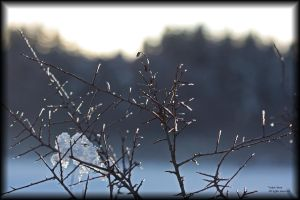 Winter spikes by vodoc