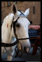 Horse Portrait by TVD-Photography