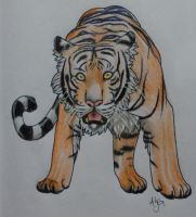 Tiger by Consci