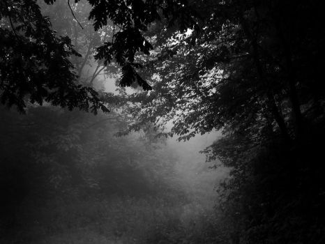 ... In the forest by VesnaRa-14
