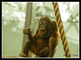 The Thinker by tleach0608