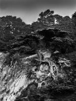 Fall time at Point Lobos by CrystalDino