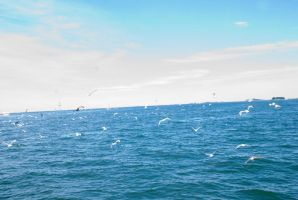 The Swarm of Gulls Over the Ocean 2 by Miss-Tbones